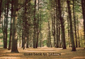 """forrest of pine trees with caption """"come back to nature"""""""